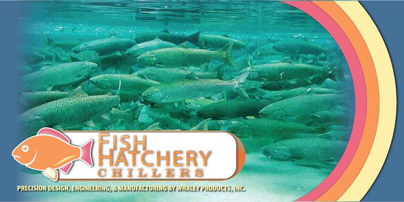 fishhatchery-history